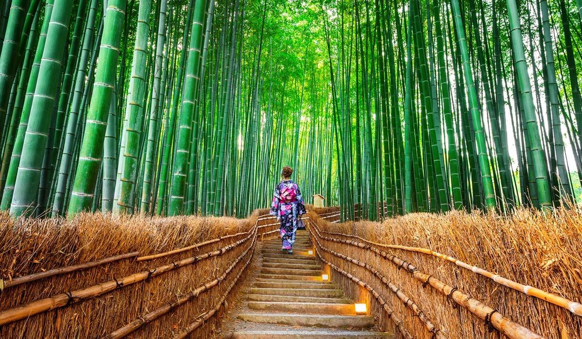 padurea de bambus kyoto japonia